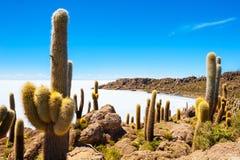Cactus on Incahuasi island, Salar de Uyuni, Bolivia Stock Photo