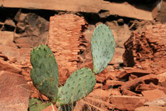 Cactus with indian ruins Stock Photo