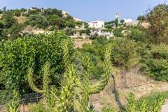 Cactus infront of a village Stock Photos