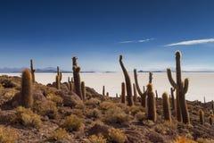 Cactus on Isla Incahuasi Stock Photography