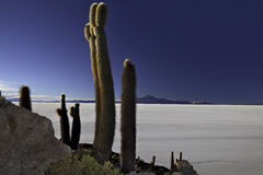 Cactus isla pescado Royalty Free Stock Photo