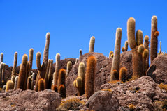Cactus Island Royalty Free Stock Photography