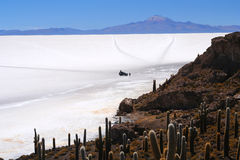 Cactus Island. In the middle of Salar de Uyuni in Bolivia Royalty Free Stock Photos