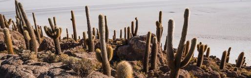 Cactus Island Royalty Free Stock Photography