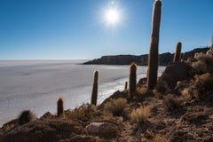 Cactus Island Royalty Free Stock Image