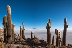 Cactus Island Stock Images
