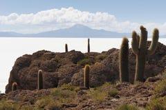 Cactus Island Incahuasi in Uyuni Salt Flats Stock Images
