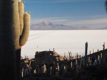 Cactus island in the Salar de Uyuni, Bolivia royalty free stock photography