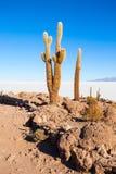 Cactus Island, Uyuni Royalty Free Stock Image