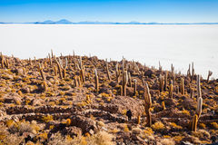 Cactus Island, Uyuni Stock Photos