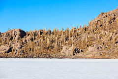 Cactus Island, Uyuni Royalty Free Stock Photos