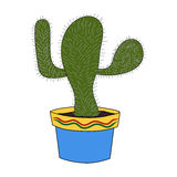 Cactus isolate Royalty Free Stock Photo