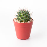 Cactus Isolate on white background Stock Photography