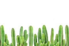 Cactus on isolated background Stock Photos