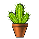 Cactus isolated illustration Royalty Free Stock Images
