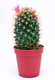 Cactus isolated on a white Stock Images