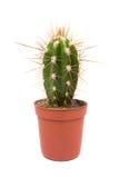 Cactus isolated on white background Royalty Free Stock Image