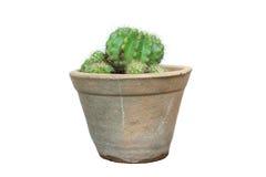 Cactus isolated on white background. Royalty Free Stock Images