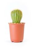 Cactus isolato su fondo bianco Fotografie Stock Libere da Diritti
