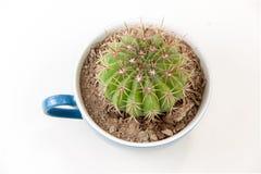 Cactus in koffiekop Stock Fotografie