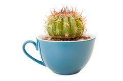 Cactus in koffiekop Royalty-vrije Stock Afbeelding