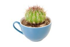 Cactus in koffiekop Royalty-vrije Stock Fotografie