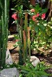 Cactus, kroon van doornen, aloë Vera Royalty-vrije Stock Foto's