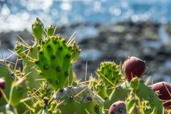Cactus at La Palma. Canary Islands Stock Photography