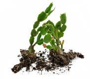 Cactus land stock images