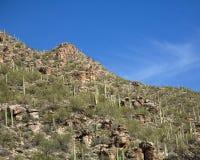 Cactus Landscape Stock Images