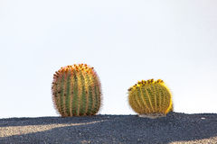 Cactus in Lanzarote island, Spain Royalty Free Stock Photography