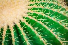 Cactus lasciato Fotografia Stock Libera da Diritti
