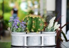 Cactus le pot sur la table dans le restaurant Image stock