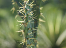 cactus leaf Stock Photo