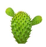 Cactus leaf isolated Stock Photos