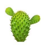 Cactus leaf isolated