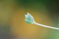 Cactus Leaf Macro Shot Stock Images