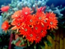 Cactus in liefde royalty-vrije stock afbeelding