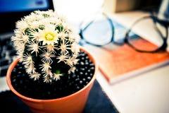 Cactus, livre et les verres photo conceptuelle au sujet de la connaissance a Image libre de droits