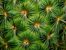 Cactus macro. Cactus up close Stock Images