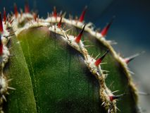 Cactus on macro stock photo