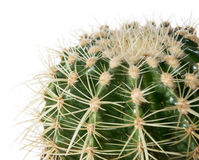 Cactus (macro shot) isolated on white Stock Image