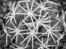 Cactus macro, top view. Of zone with needles stock photos