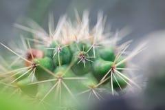 Cactus Macroschot Stock Foto's