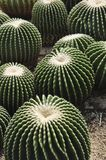 Cactus made mini garden Royalty Free Stock Photography