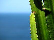 Cactus in mare Immagini Stock Libere da Diritti