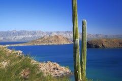 Cactus, mare e montagne fotografia stock libera da diritti