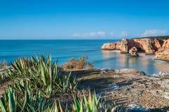 Cactus marino dell'aloe su un fondo di un paesaggio del mare portugal Fotografie Stock Libere da Diritti