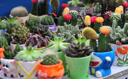 Cactus market stock photo