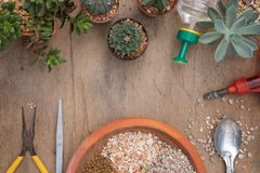 Cactus meal. Lunch time Stock Image